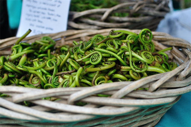 fiddlehead-ferns-